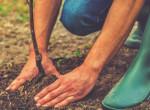 Súlyos hibák kertgondozás közben, amikkel tönkreteheted a környezeted
