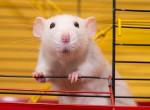 Teljesen megszűnhetnek az állatkísérletek - ez veheti át a helyét