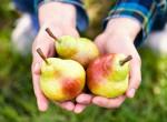 Csökkenti a rák és a stroke esélyét - Igazi szuperétel ez az őszi gyümölcs