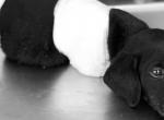 Brutálisan megkínozták ezt az 1 hónapos kiskutyát - Megrendítő fotók