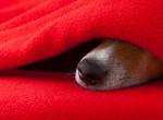 Az állatorvos tanácsai: így védd meg kutyád egészségét a szeszélyes téli időben