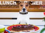 Hogy kerül a kutya az asztalra?