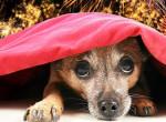 Kutyatartók! Erre figyeljetek az augusztus 20-i tűzijátékkal kapcsolatban