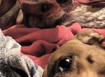 Csak egy fotó két kutyáról, mégis milliók szemét csapta be