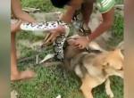 Hátborzongató: Gyerekek küzdöttek az óriáskígyóval a kutyájukért - Videó