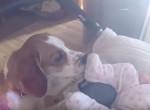 A kutyus először találkozik a kisbabával, látnod kell a reakcióját