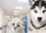 A kutyás vagy a macskás emberek boldogabbak? Eldőlt az örök vita