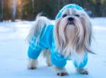 Gazdi vagy? Így öltöztesd fel a kutyusod a téli hidegben!
