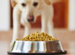 Súlyos betegséget okozhatnak! Itt a fertőzött kutyaeledelek listája