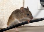 Azonnali segítség! Így szabadulj meg az egerektől otthonodban