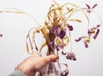Haldoklik a szobanövényed? Ezzel az otthoni trükkel még életre keltheted