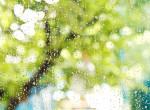 Életében először látott esőt egy ausztrál kisfiú, így reagált rá - Videó