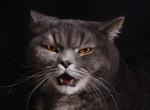 Vadállat lett a házi kedvencből: Saját macskája ejtette foglyul a rémült nőt