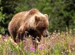 Lélegzetelállító medvecsatát videózott le ez a nő