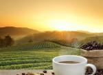 Kiderült, hogyan hat a bélflórádra, ha rendszeresen kávézol