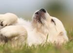 Kiderült: Erről álmodnak a kutyák