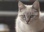 Hihetetlen - Így kötődik a macska az emberhez