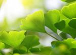 Hihetetlen, de ez a növényfaj genetikailag képtelen az öregedésre