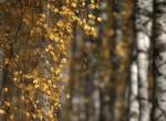 Teljesen átszabja a szibériai élővilág arculatát a klímaváltozás