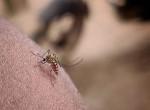 Nyaralás közben szúnyog csípte meg a lányt, újra meg kellett tanulnia járni