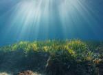 Rémisztő tengeri lényről készítettek felvételt a tudósok - Videó