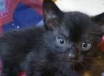 Bizarr rendellenesség - Pókszerű lábakkal született egy macska