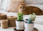 Megtalálod a macskát az ábrán? Ha igen, nem mindennapi IQ-val rendelkezel