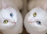 Megőrül értük az internet - Ez a két macska az Instagram sztárja