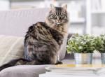 Vigyázz, mivel díszíted a lakást: Ezek a növények mérgezőek a macskákra