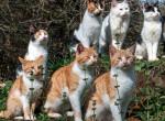 Itt az igazi álommeló macskásoknak - Vétek lenne kihagyni