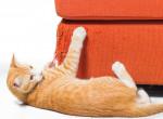 Kanapé vagy macska? 6 tipp a kaparás ellen, hogy mindkettőt megtarthasd