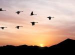 Ilyet még senki sem látott: Elhullott madarak százai potyognak az égből Új-Mexikóban