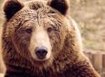 Megint feltűnt a medve Miskolcon – Videó