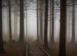 Hátborzongató, ami ebben az erdőben történik – Tényleg földönkívüliek okozzák?