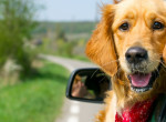 Ha legszívesebben mindenhova magaddal vinnéd - Így utazz a kutyáddal a nyáron!