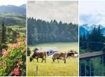 Csokimámor az osztrák Alpokban -  A lila tehén nyomába eredtünk