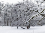 Fehérben ragyog a Normafa, csodás látványt nyújt a hóval borított kirándulóhely - Fotók