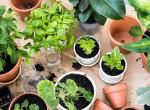 Nem is tudtad, milyen veszélyesek: 3 mérgező szobanövény