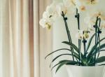 Öntözd így az orchideád, és több ideig fog virágozni