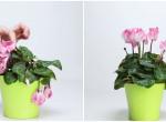 3 összetevős házi praktika, amivel felélesztheted haldokló növényeid