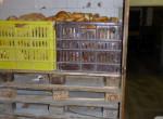 Súlyos problémák miatt függesztette fel a Nébih egy Pest megyei pékség működését