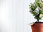5 növény, ami 2021-ben gazdagságot hozhat számodra