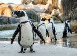 Láttál már Afrikában pingvint? 7 hely, ahol találkozhatsz velük