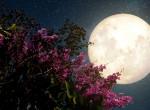 Pink Hold vár ránk Nagypénteken - Ilyen látványban lehet részünk