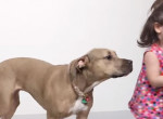 A gyerekek először találkoznak a pit bullal - A kutya reakciója meglepő!