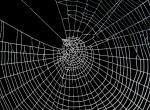 Horror! Több száz méteres hálót szőttek a pókok a városban