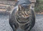 Kigyúrt macskán pusztul az internet