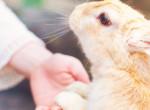 Az állatvédők figyelmeztetnek - Ezért ne ajándékozz élő állatot húsvétkor