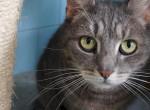 Egy napra jótékonysági macskakávézó nyílik a Rex Állatszigeten
