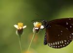 Kiderült, melyek a legkedveltebb és a legutálatosabb rovarok